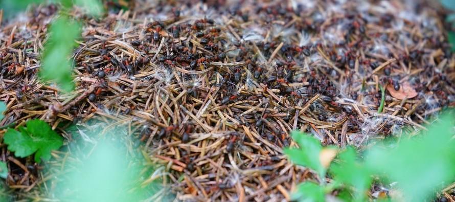 I mravi imaju svoje toalete