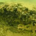 podvodna-suma