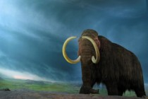 Da li će mamuti opet šetati planetom?