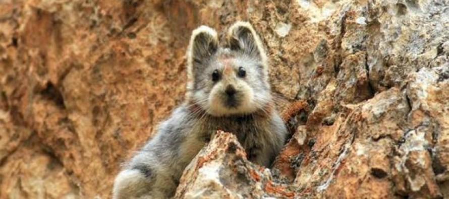 Nova vrsta sisara koja beži istraživačima već 20 godina