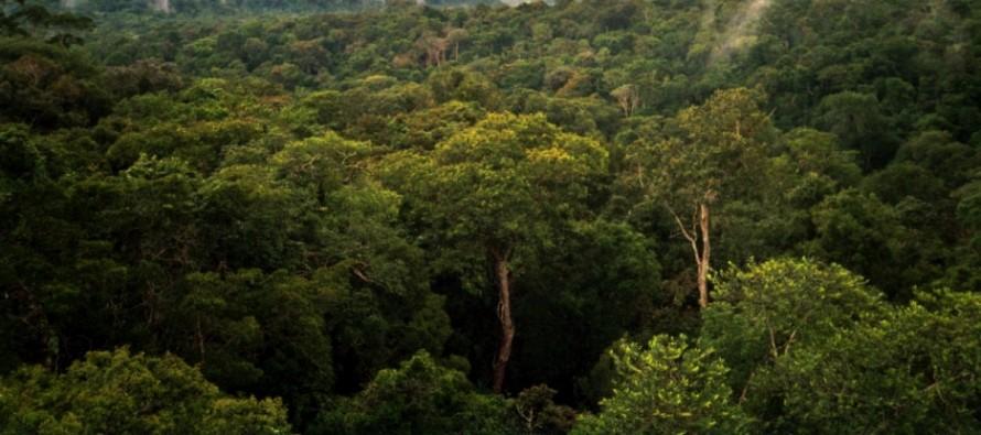 Nova vrsta majmuna otkrivena u prašumi Amazona