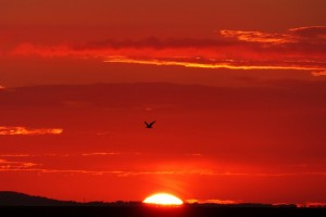 sunce-izlazak