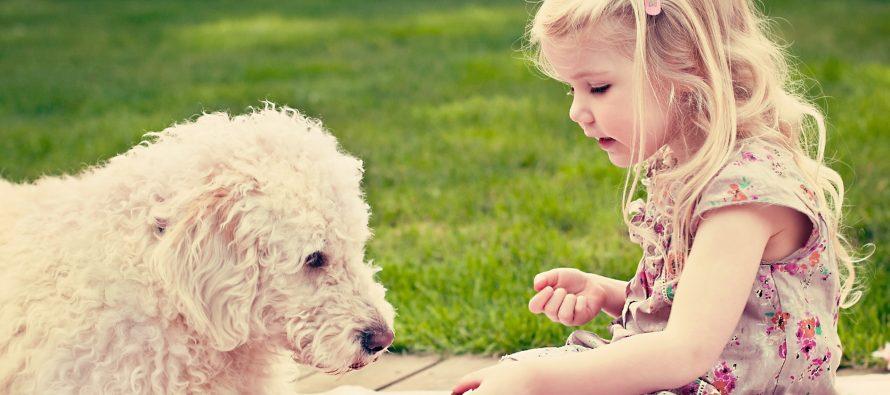 Koja je razlika između ljudske i životinjske dlake?