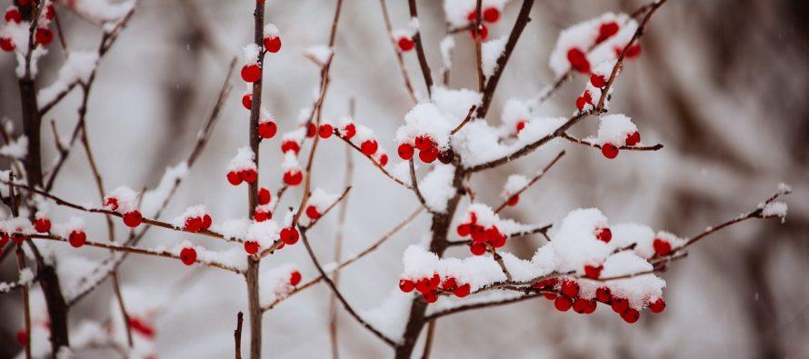 Ko ima više izraza za sneg čak i od Eskima?
