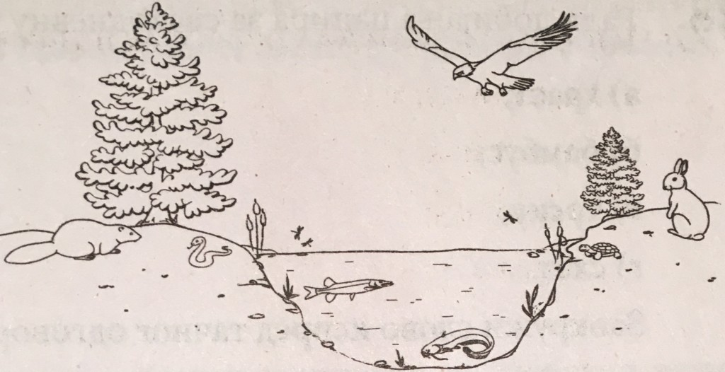 biologija ekosistem