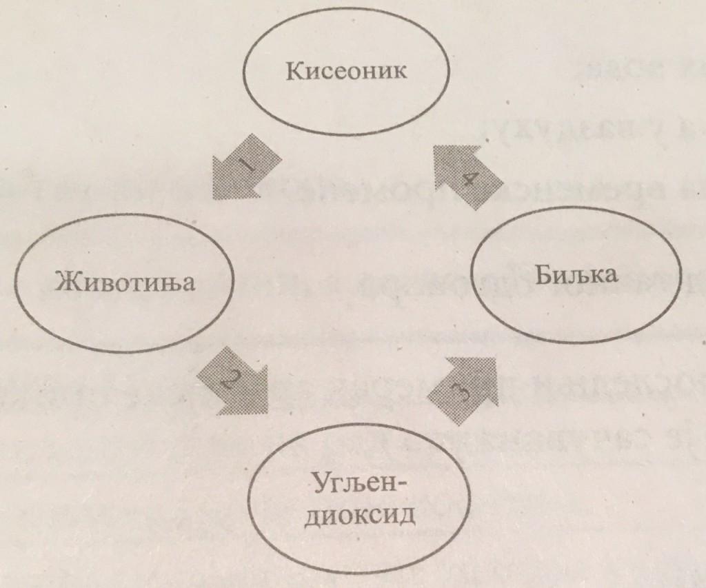 Biologija proces