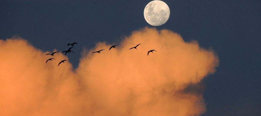 Šta bi se dogodilo kada bi Mesec počeo da se približava Zemlji?