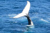 Usamljeni kit
