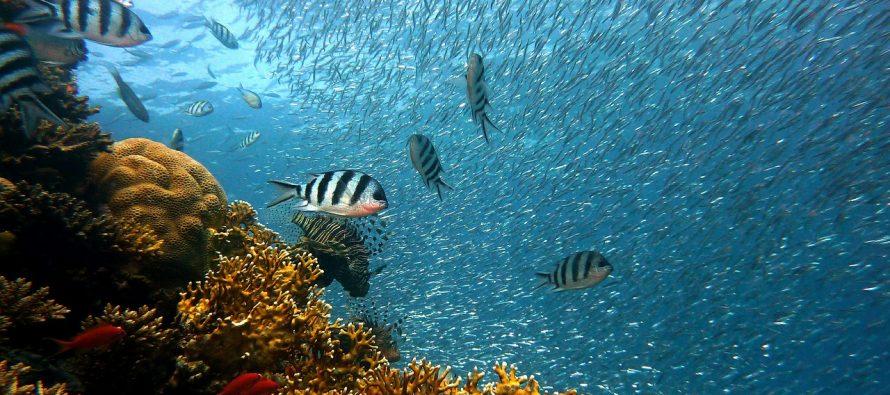 Veliki koralni greben je pretrpeo najteži udar bele smrti u skorijoj istoriji