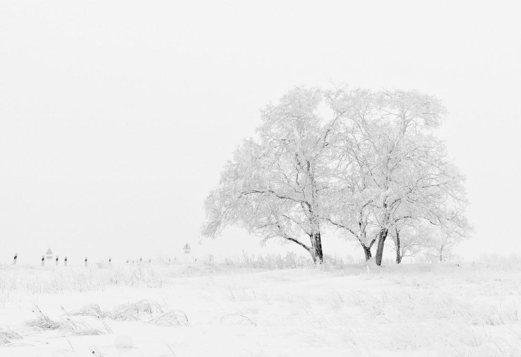 sneg-drvo
