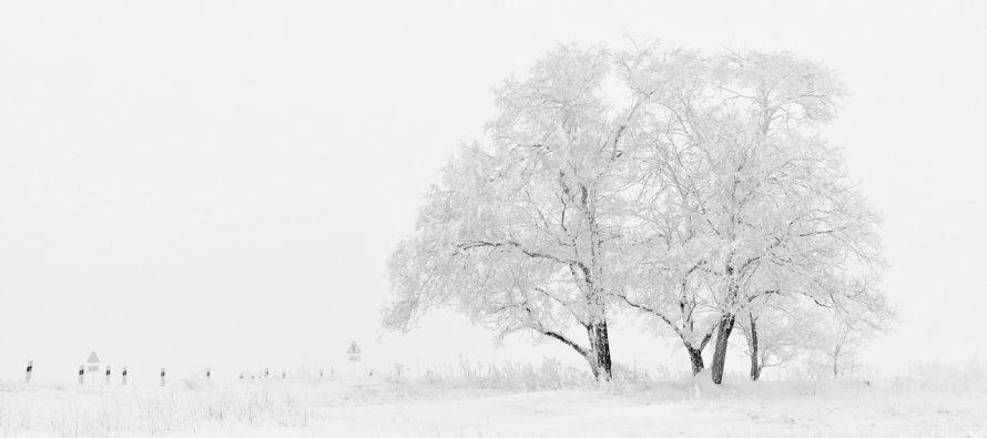 Sve što niste znali o snegu!