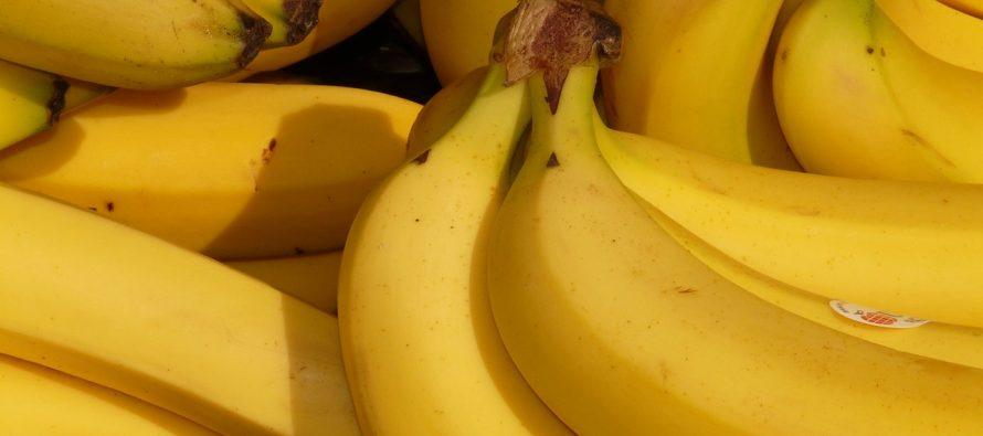Banane bi uskoro mogle da nestanu!