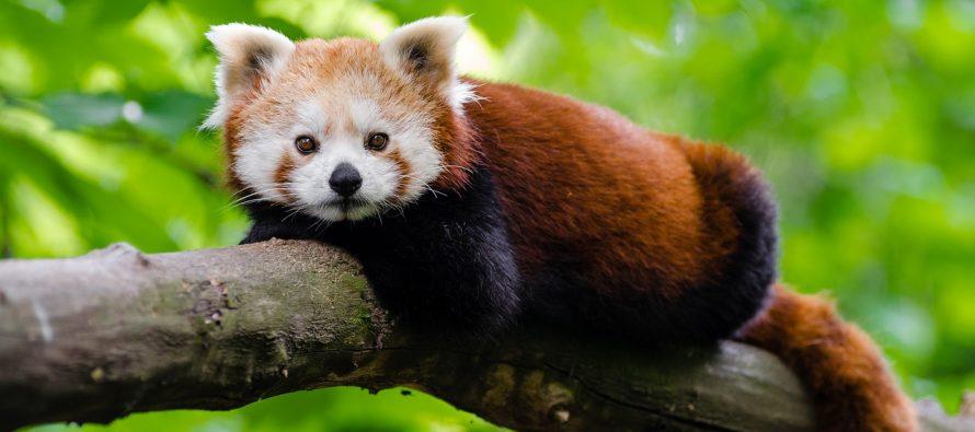 Lista najređih životinja na svetu!