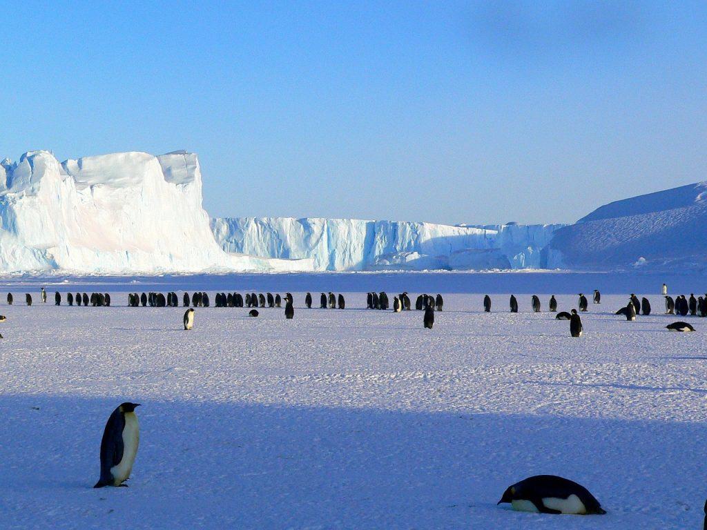 pingvini led