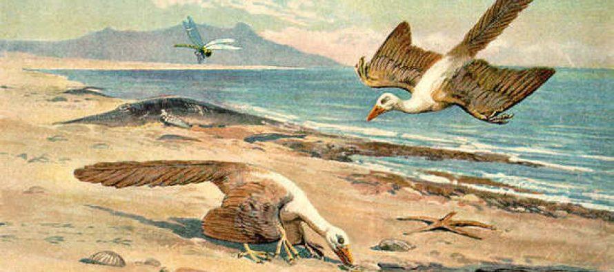 Naučnici i dalje nisu sigurni kako su nastale ptice