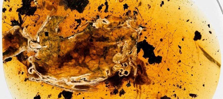 Otkriven potpuni fosil ptice star 99 miliona godina!