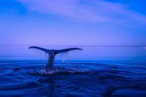 Zavirite u podvodni svet kitova