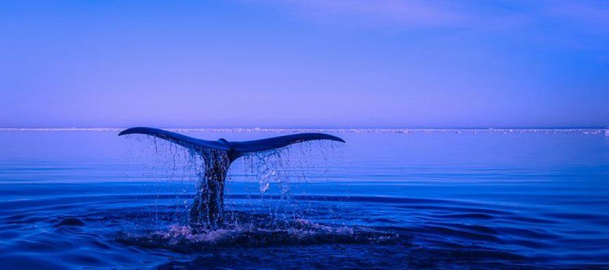 Kitovi sa četiri noge nekada su vladali morem i kopnom!