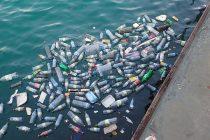 Mikroplastika u vodama menja lanac ishrane kod morskih životinja