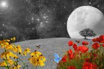 Da li je moguće posaditi biljke u svemiru?