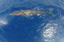 Zašto su kitovi i ostali vodeni sisari toliko veliki?