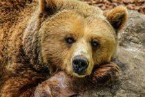Kada koristimo frazu Medveđa usluga?