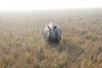Zašto je javanski nosorog ugrožena vrsta?