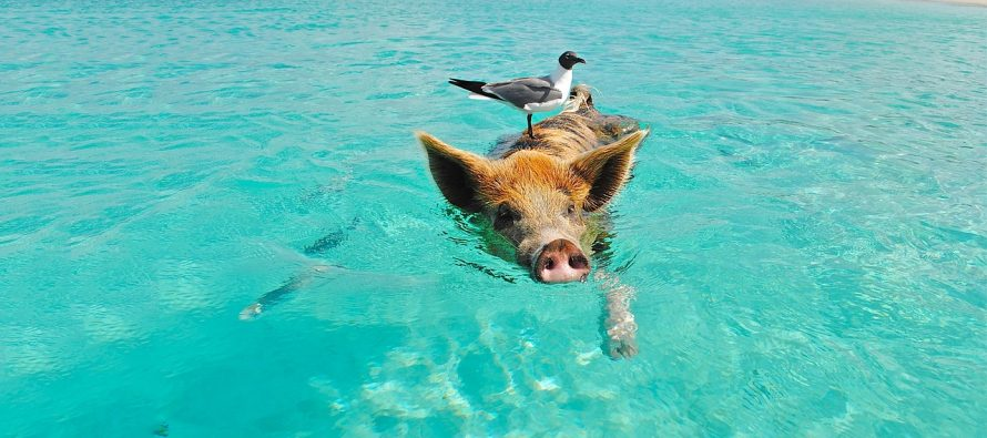 Na ovim ostrvima gospodare životinje