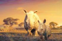 Srceparajući animirani film o opstanku životinja na planeti
