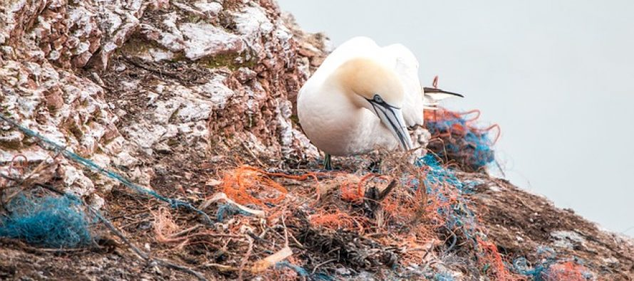 Jedan tinejdžer posvetio je život čišćenju mora!