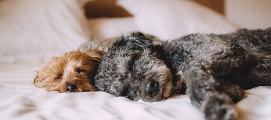 Predstavljamo 5 najstarijih rasa pasa