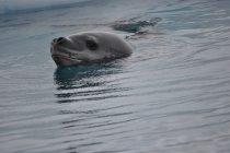 Traži se vlasnik USB-a pronađenog u izmetu morskog leoparda!