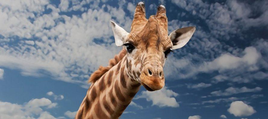 Znate li koji je najstariji sisar na svetu?