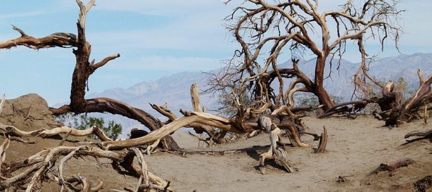 Čudo prirode: Pojavilo se jezero u Dolini smrti!