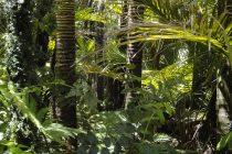 Šta bi se desilo kada bi Amazonija nestala?