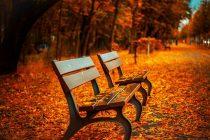 Zašto lišće menja boju u jesen?