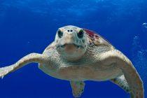 Džinovske kornjače se mogu istrenirati?