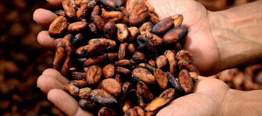 Kada se prvi put počeo koristiti kakao?