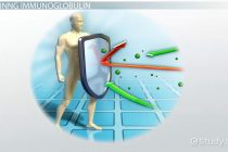Šta je imunoglobulin E?