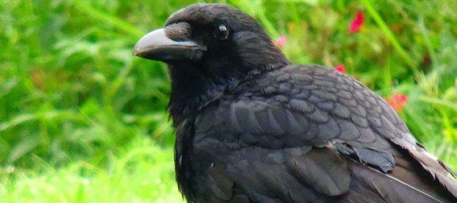 Ove su ptice najodaniji partneri